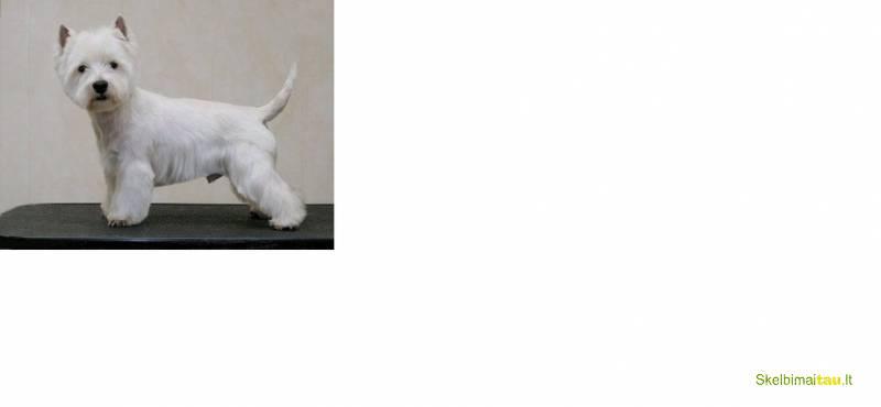 Gyvūnų kirpykla -gydykla šiauliuose