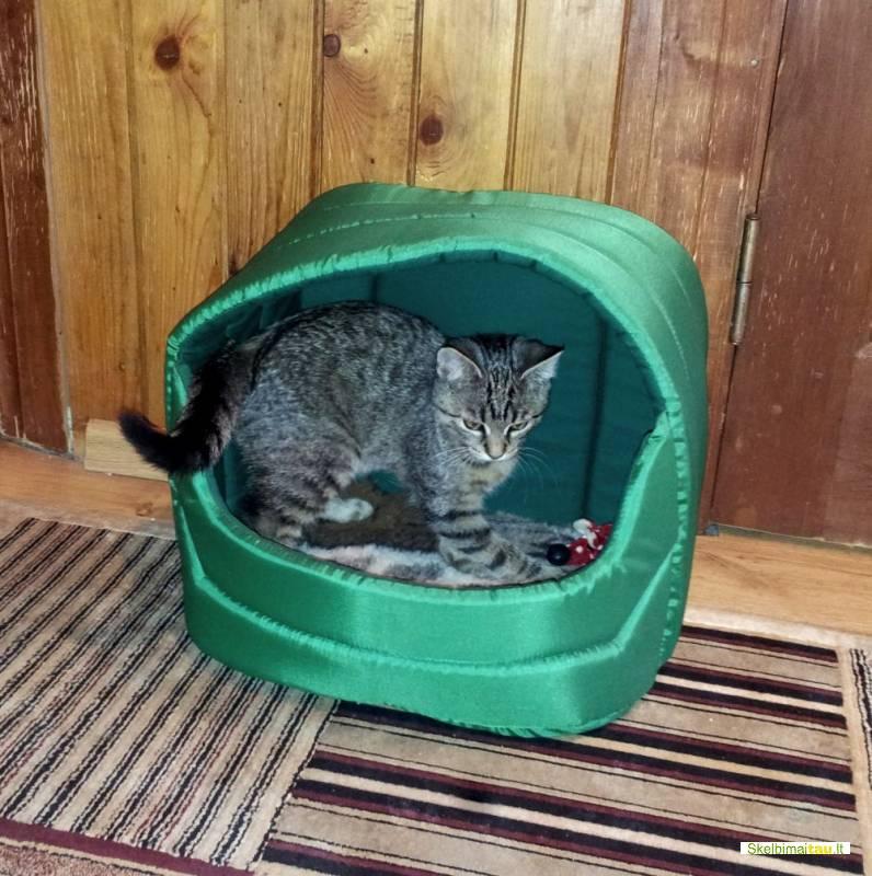 Namelis katei,katino namelis vilniuje nuo 30 lt