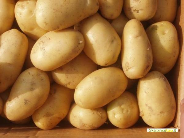 Parduodu dideles bei mažas bulves taip pat kviečius taifūnas