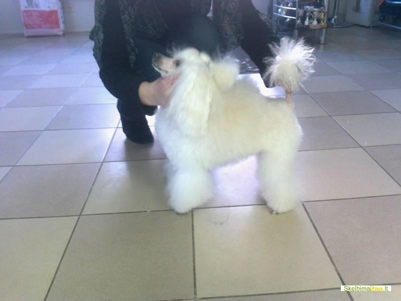 Šunų grožio salonas/kirpykla šiauliuose